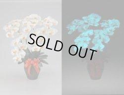 画像1: 蓄光花(夜光る豪華な造花) 胡蝶蘭